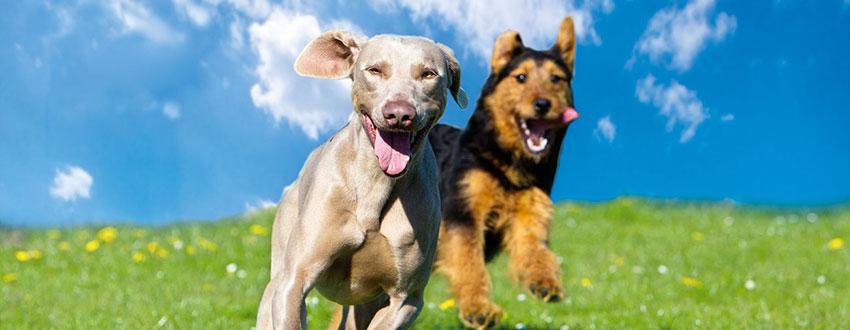 Hundenahrung von ARAS