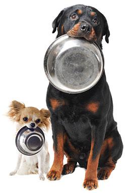 Hunde Monatsrationen Bild