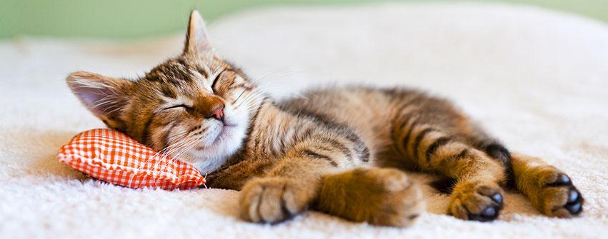Katzennahrung von ARAS