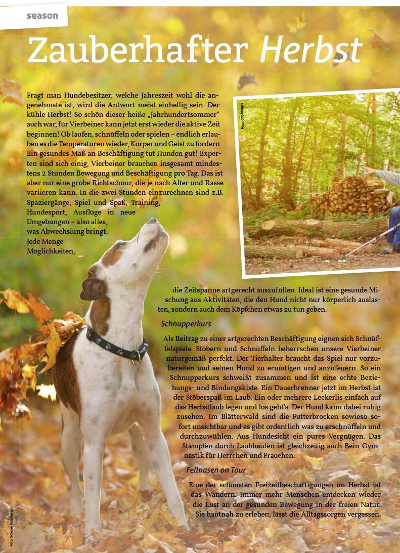 Zauberhafter Herbst für Hund und Katze